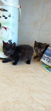 """Сиротки-котята ищут """"родителей"""""""