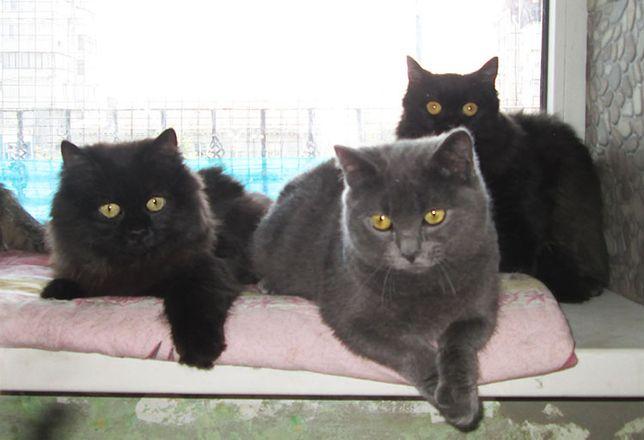 котята-таксята