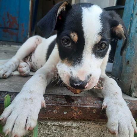 Мальчик, 2 месяца, ищет дом)
