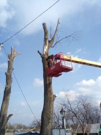 Обрізка дерев та спил дерев