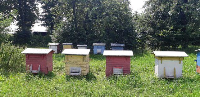 Ule razem z rodziną pszczelą