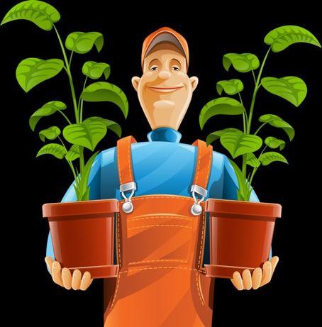 Услуги садовника, уход за комнатными растениями.