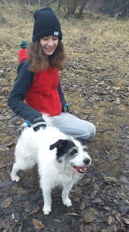 Romiś- mały pies poleca się do adopcji