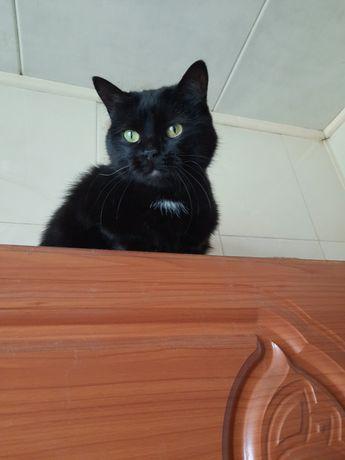 Отдам чёрную кошку,  2 года, стерилизована