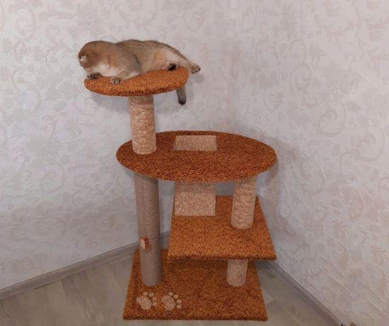 Когтеточки. Изготовление кошачьих комплексов. Игрушки для кошек