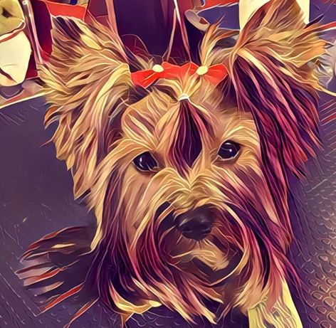 Groomer, DOG&CAT Salon dla psów, psi fryzjer, 12 lat na rynku
