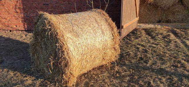 Słoma sucha pszenna bale 130x120 siatka bele