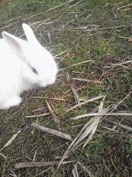 Кролики. Крольчата декоративные, карликовые
