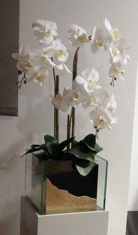 Orquídea decoração