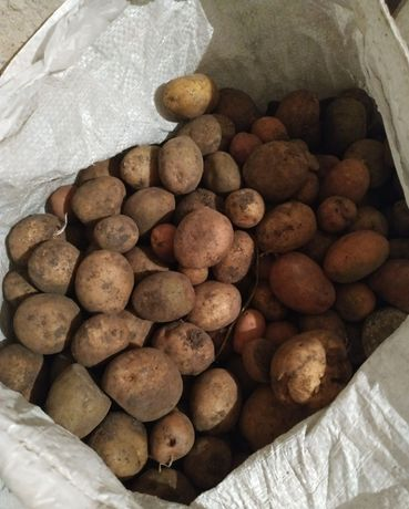 Картошка мелкая ,в наличии 10 мешков