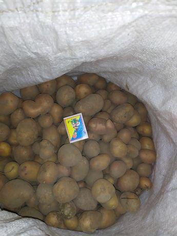 Мелкая картошка продам