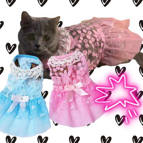 Sukienka Koronkowa dla Zwierzęcej Piękności.