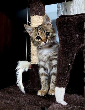 Мася, котенок, 2.5 мес.  Ласковый ребенок. Киев