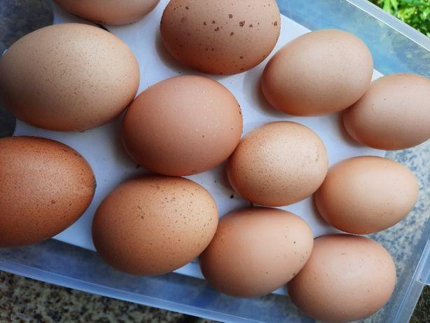 Ovos de galinhas caseiros