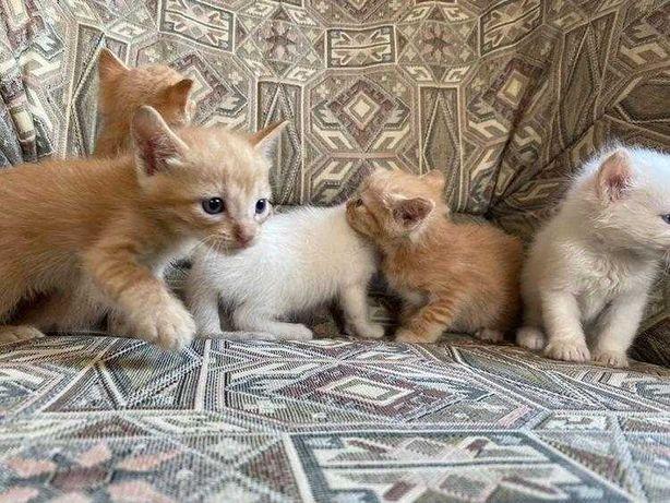Gatos bebés para adopção responsável