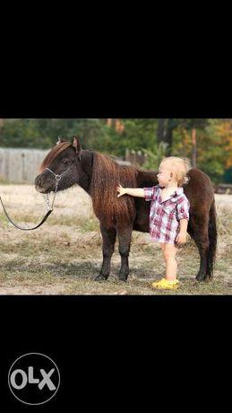 Продам карликовую лошадь 65 см