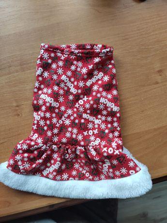 Sukieneczka świąteczna dla małej suczki lub kotki