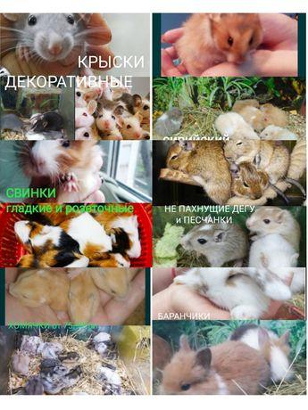 Хомячки, крыски, дегу, клетки, магазин
