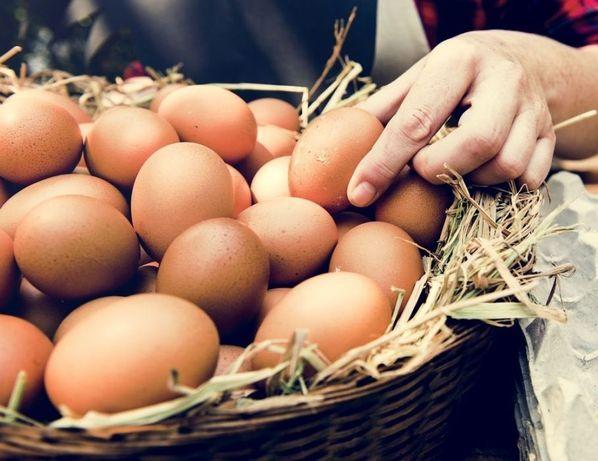 Jajka wiejskie Z WOLNEGO WYBIEGU dowóz gratis