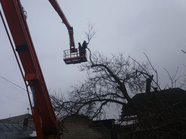 Зрізка,зрізання дерев,зрізати дерево,обрізка,спил,порізка,обрезка Хмельницкий - изображение 1