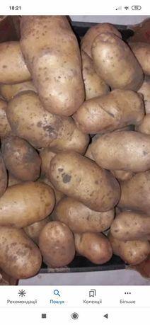 Продам картоплю домашню