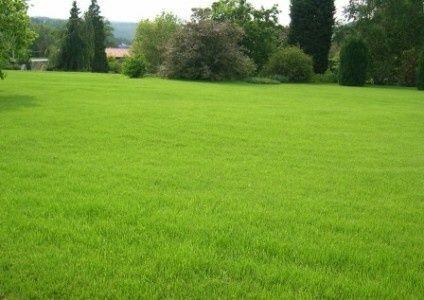 Рулонный газон под ключ. Доступные цены, качественный газон