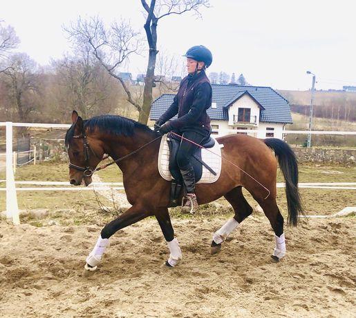 Wspaniały koń do ambitnej rekreacji lub sportu, bdb TUV
