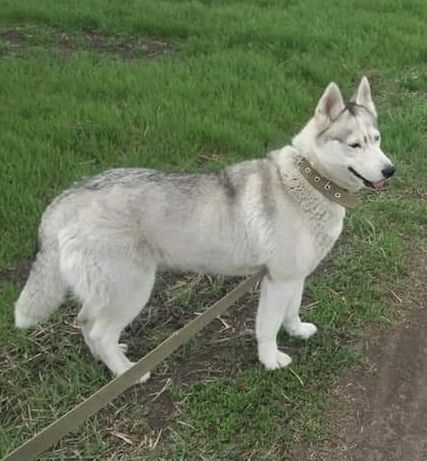 Пропала собака. с.Богдановка.