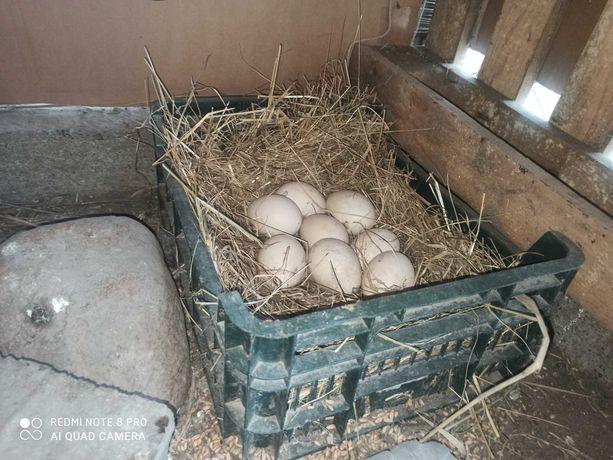Jajka ekologiczne, wiejskie z Ożarowa
