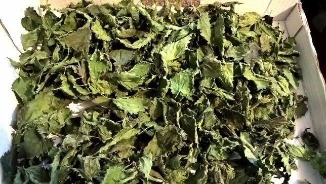 Pokrzywa suszona liście, ekologiczna- herbatka na odporność- opak. 30g