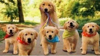 Вигул собак у районі парку/озера