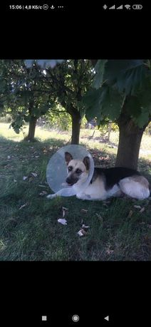 Пропала собака пос. Солнечный
