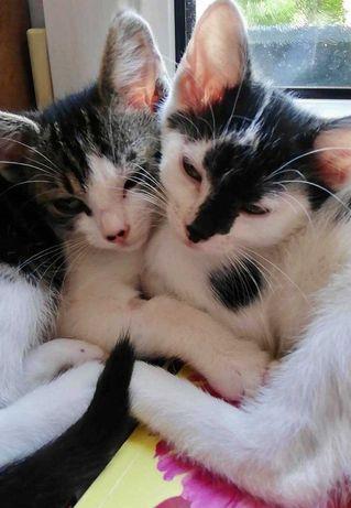 Pokochaj i Przygarnij Lily i Nalę
