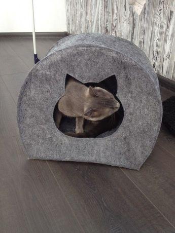 Домик для кото. Кот. Хит продаж