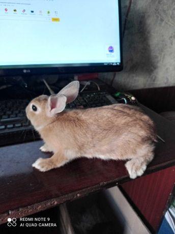Продам кролика с клеткой.