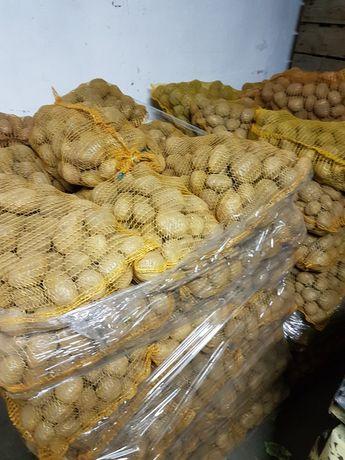 Ziemniaki Owacja Bellaroza Tajfun Jelly Denar,transport