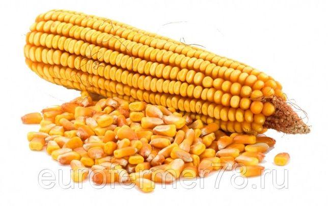 Продам кукурузу свежескошенную