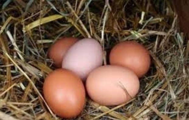 Jajka kurze z własnego domowego chowu