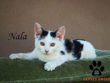 Malutka kotka Nala czeka na troskliwy dom