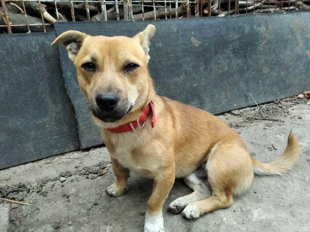 Этот пес найден на 3 км.