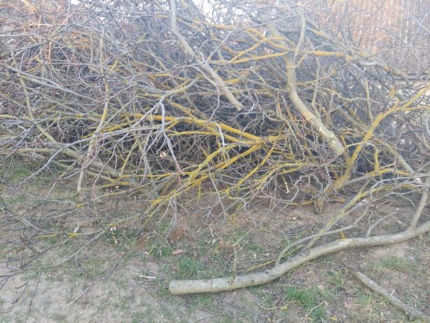 Oddam za darmo gałęzie z orzecha