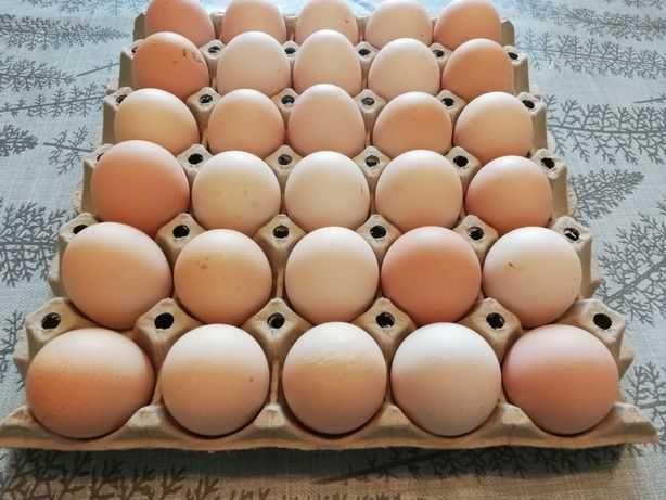 Jajka wiejskie z wolnego wybiegu ekologicze
