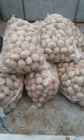 Ziemniaki wielkość sadzeniaka  irga Nowe