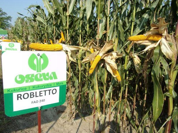 Nasiona kukurydzy kukurydza ROBLETO kiszonka FAO 240 80tys