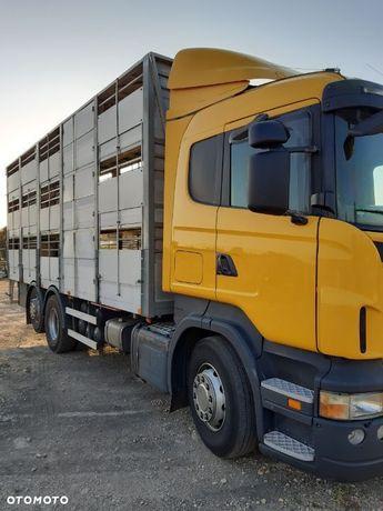Scania R 420  SCANIA R 420 do przewozu zwierząt z wagą
