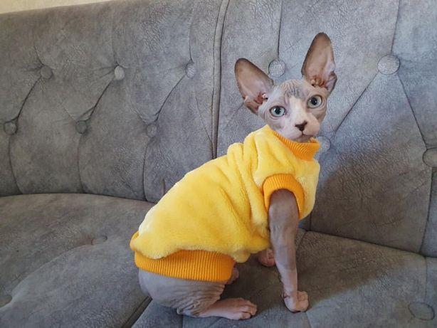 Теплая одежда для котиков. Одежда для сфинкса.