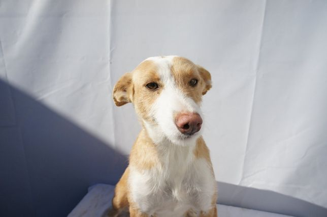 Branquita - cadela porte médio
