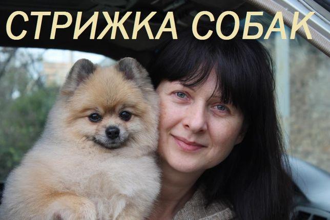 Стрижка собак(йорки,болонки,пудель,шпиц) Торез,Шахтерск,Снежное