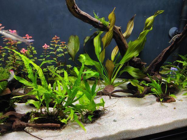 Akwarium 200l wyposażenie stolik