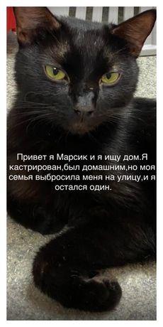 Котик в добрые руки срочно